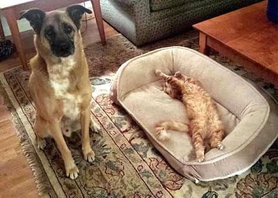Quand Le Chat Se Met à Squatter Le Panier Du Chien