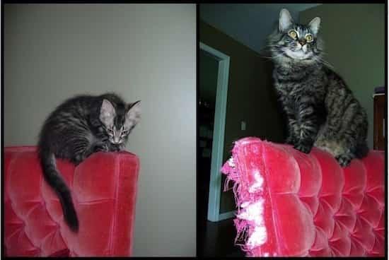 39 photos avant apr s qui montrent comment l 39 amour a chang la vie de ces chats. Black Bedroom Furniture Sets. Home Design Ideas