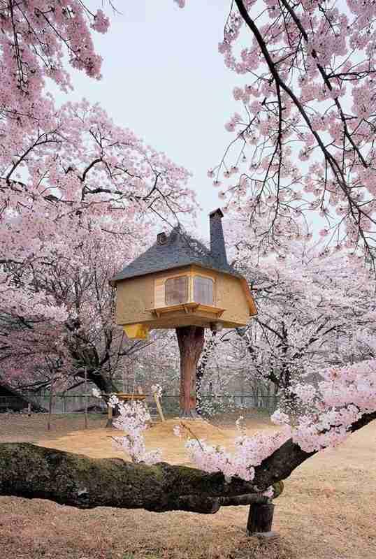 salon de thé perché dans les arbres au japon