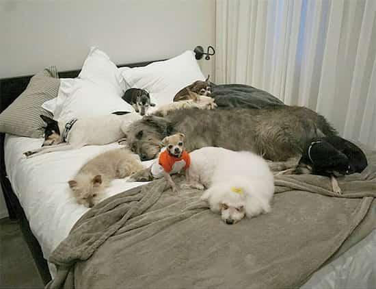 vie des chiens adoptés d'une refuge