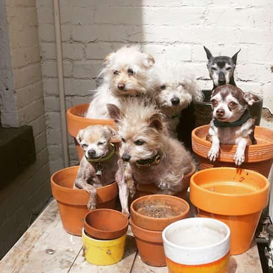petits chiens adoptés vieux dans pot de fleurs