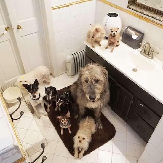 adoption vieux chiens car beaucoup plus sages
