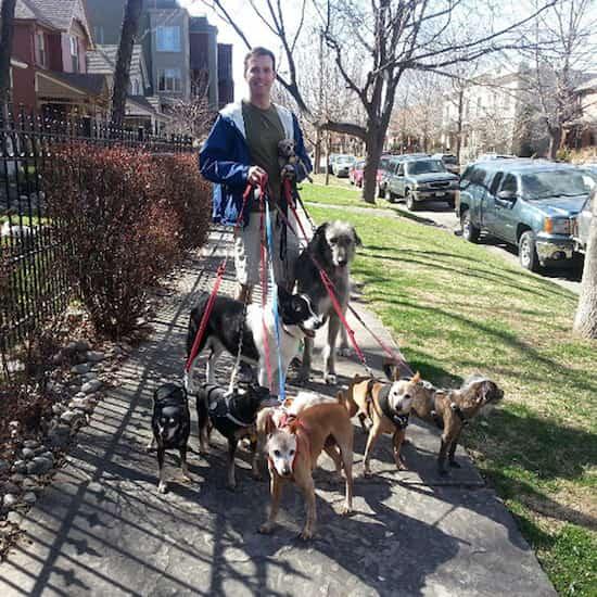 adoptions de 10 vieux chiens