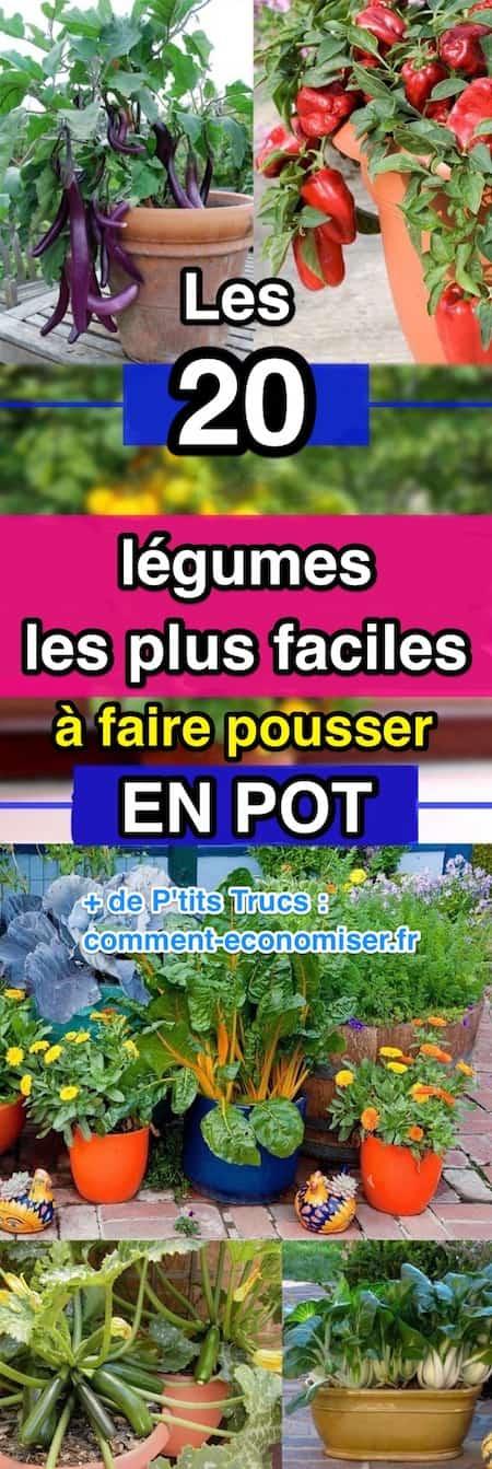 Quelles fleurs planter en juillet acte with quelles - Comment semer du persil ...