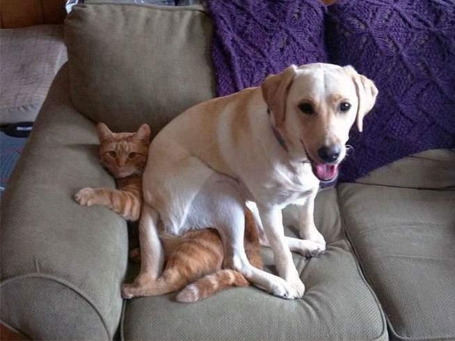 chien assis sur le chat roux