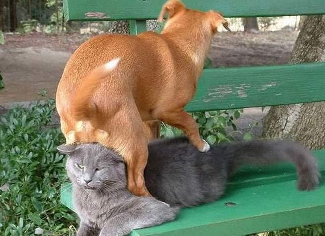 chien roux assis sur le chat gris