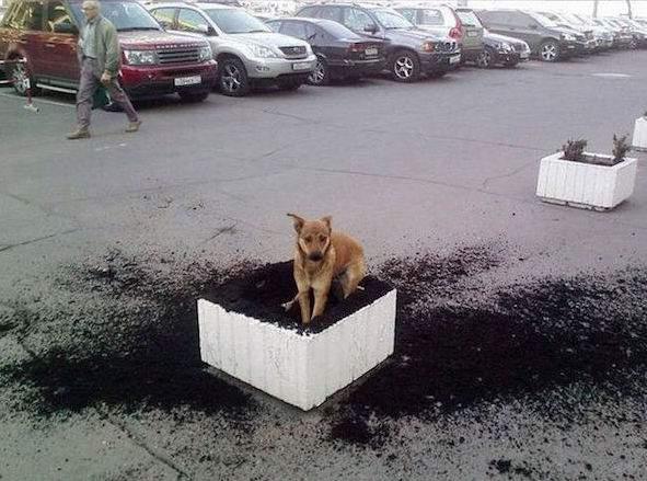 chien qui gratte dans pot de fleurs