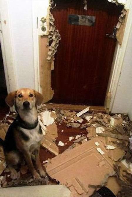 chien qui a arraché le papier peint
