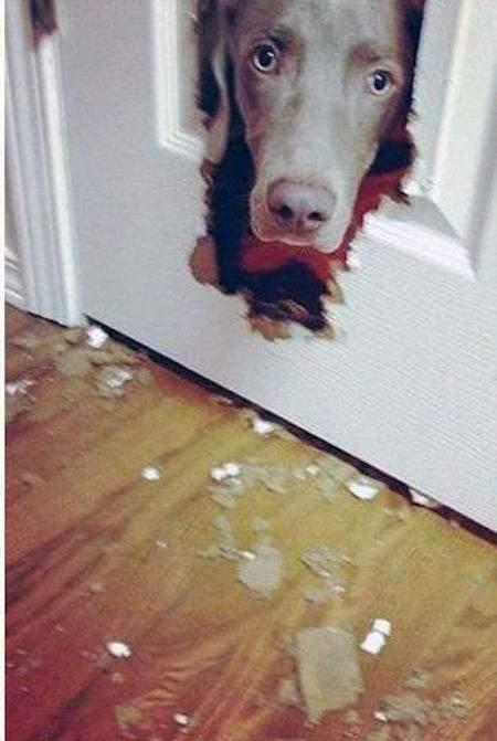 chien qui a mangé la porte