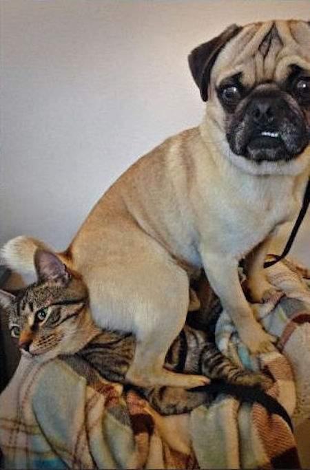 chien qui s'assoit sur le chat