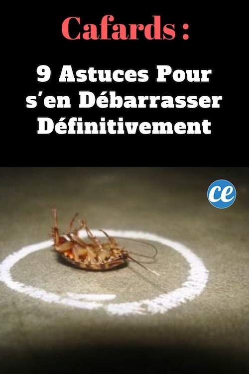 Cafards 9 astuces pour s 39 en d barrasser d finitivement - Fourmis comment s en debarrasser ...