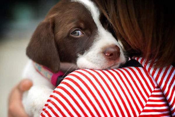 réconfortez votre chien quand il a peur des orages et des feux d'artifice
