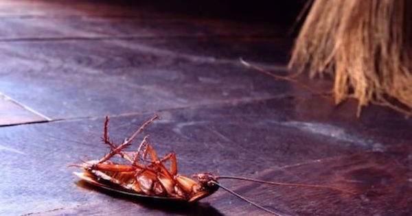 Un cafard mort sur le sol à côté d'un balai