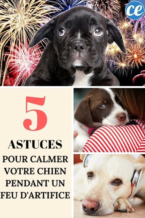5 astuces pour calmer instantan ment votre chien pendant un feu d 39 artifice. Black Bedroom Furniture Sets. Home Design Ideas