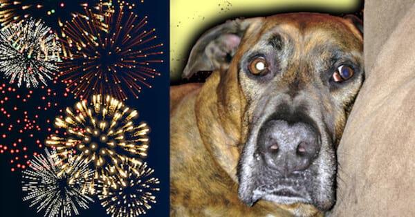 un chien effrayé par les feux d'artifice