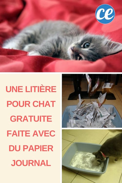 litiere chat papier journal