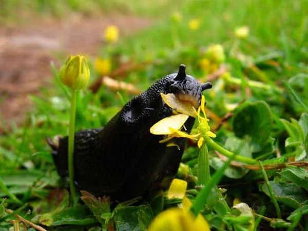 utilisation vinaigre jardin se débarrasser des limaces vinaigre