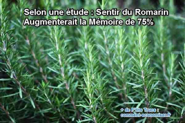 mémoire vertu bienfait odeur romarin