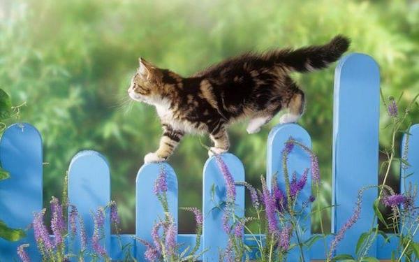 un chat se promène sur une barrière