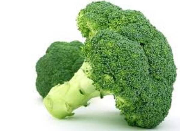 les chiens peuvent manger des brocolis en quantité modérée