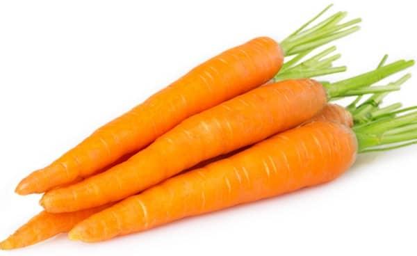les chiens peuvent manger des carottes