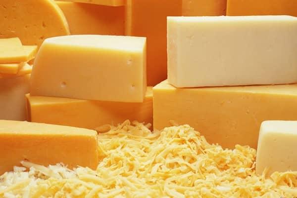 les chiens peuvent manger du fromage avec modération