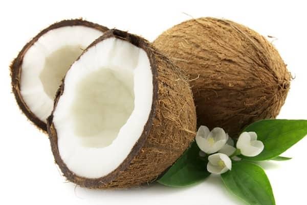 les chiens peuvent manger de la noix de coco avec modération