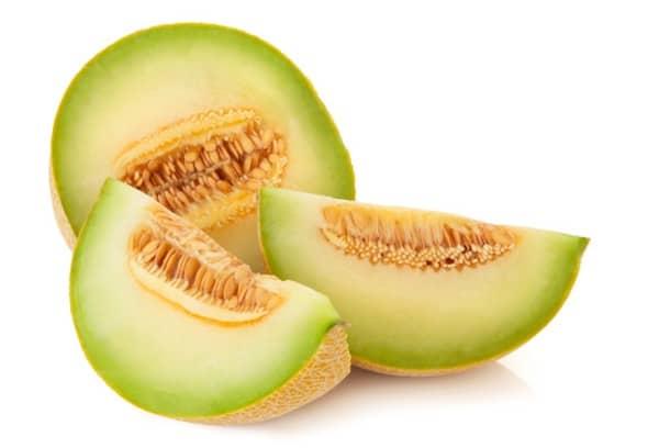 les chiens peuvent manger du melon vert