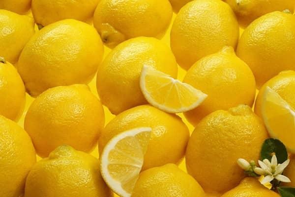 les chiens ne doivent pas manger des citrons