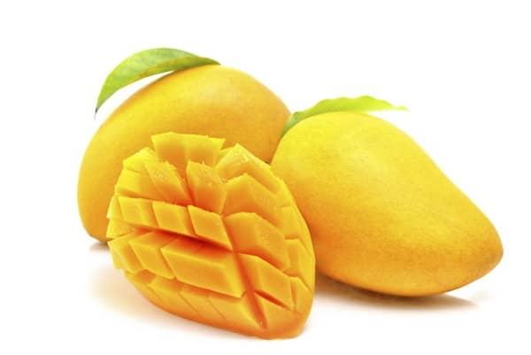 les chiens peuvent manger de la mangue