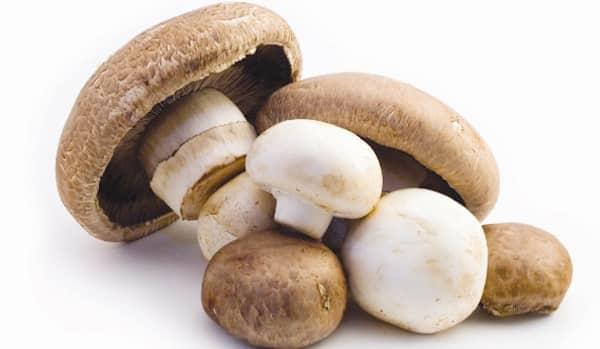 les chiens peuvent manger des champignons qui ne sont pas sauvages