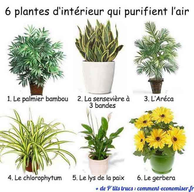 6 plantes d 39 int rieur qui purifient l 39 air - Porte plantes d interieur ...