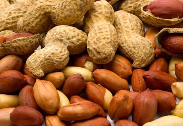les chiens peuvent manger des cacahuètes avec modération