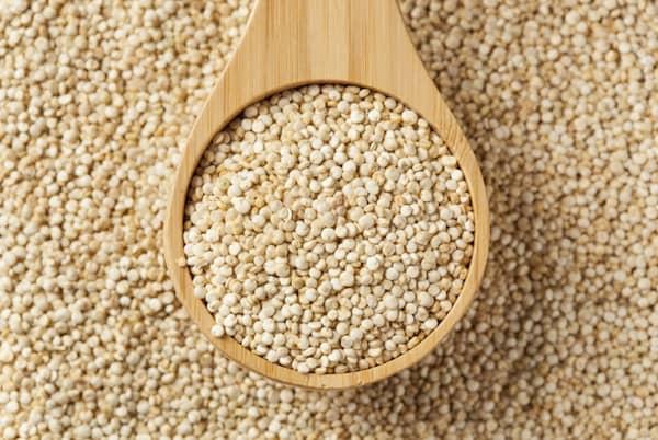 les chiens peuvent manger du quinoa