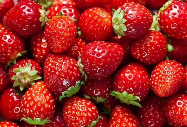 les chiens peuvent manger des fraises avec modération