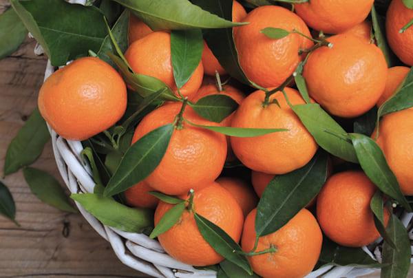 les chiens peuvent manger des mandarines