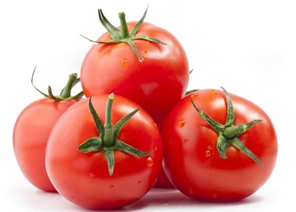 les chiens peuvent manger des tomates mûres