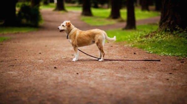 Astuce pour retrouver son chien perdu