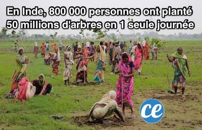 800 000 indiens qui plantent des arbres dans la terre