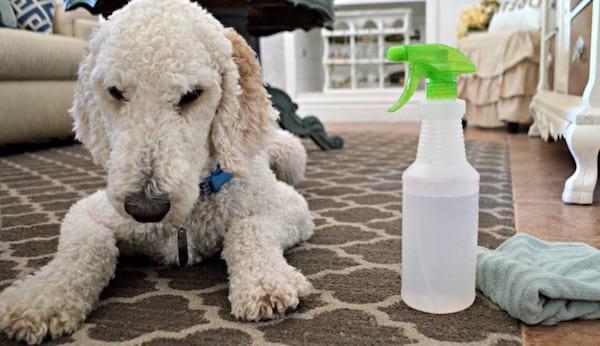 10 utilisations g niales du vinaigre blanc dans toute la - Nettoyer un tapis avec du vinaigre blanc ...