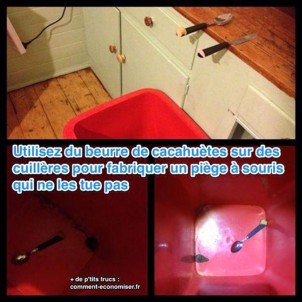 Tuer Les Souris Dans Les Maisons voici comment fabriquer un piège à souris efficace (sans les tuer).