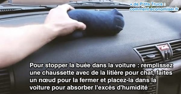 litiere chat voiture