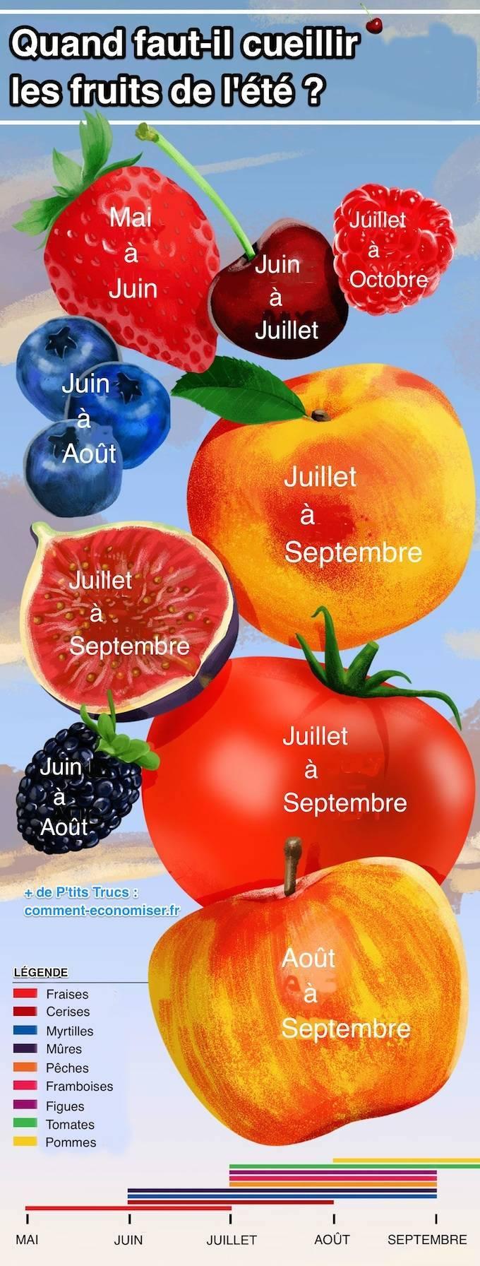 Calendrier de la cueillette des fruits été