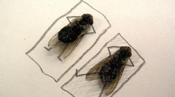 Que faire contre les mouches. Voici un répulsif efficace.