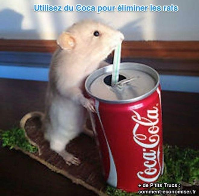 eliminer les rats avec du coca