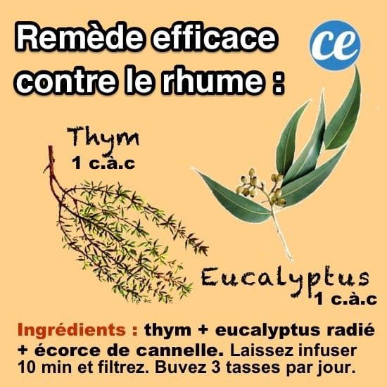 le remède naturel contre le rhume eucalyptus et thym