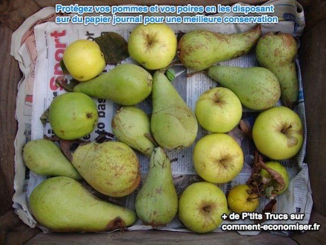 Protégez vos pommes et vos poires en les disposant sur du papier journal pour une meilleure conservation