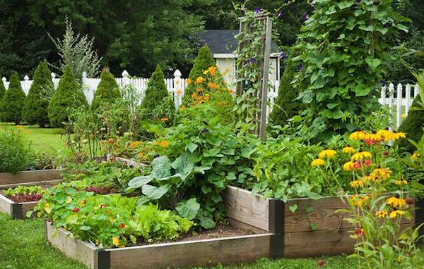 comment faire un jardin potager facilement pour débutants