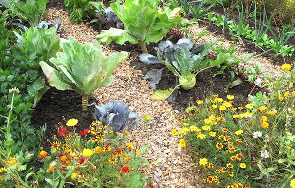 espacez les légumes et fleurs dans le potager