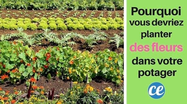 pourquoi vous devriez toujours planter des fleurs dans votre potager. Black Bedroom Furniture Sets. Home Design Ideas